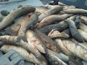 Ответственность за браконьерство рыбы в россии 2020