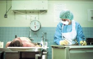 Как долго ждать результаты судмедэкспертизы