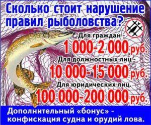 Какие штрафы за ловлю рыбы сетями