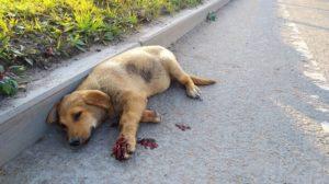 Наказание за сбитую собаку на дороге