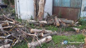 Куда обращаться чтобы спилили дерево под окном в москве