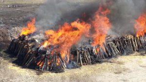 Сжигание трупов животных