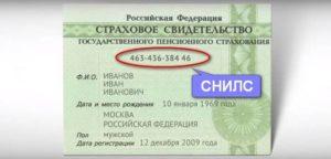 Где получить снилс в приморском районе санкт петербурга