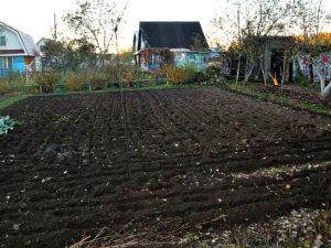 Можно ли в новой москве взять землю аренду под огород
