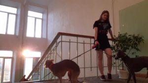 Правила выгуливания собак в ссанкт петербурге 2020