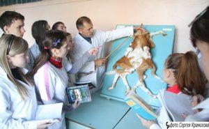 Можно ли стать городским ветеринаром  уйдя после 9 класса